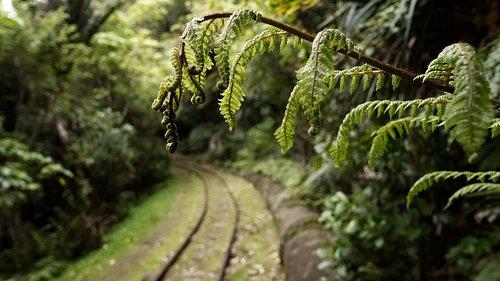 nature  wood  fern