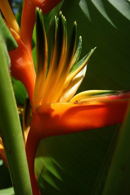 nature  flora  leaf