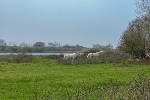 nature  field  prairie