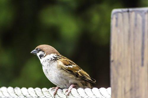 nature  outdoors  bird
