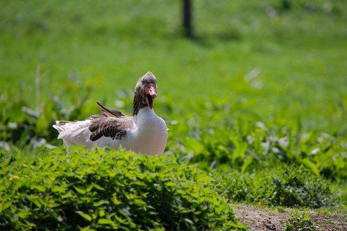 nature  grass  bird