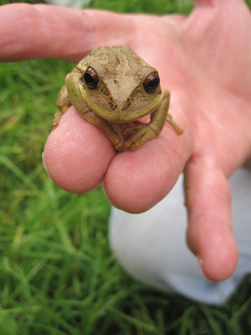 nature  animal  amphibian