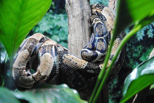 nature  snake  reptilia