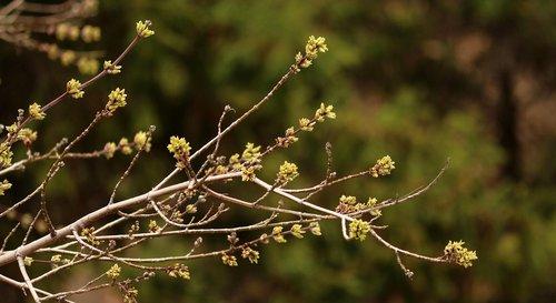 nature  plant  tree