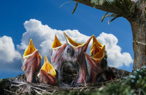 nature  animals  bird