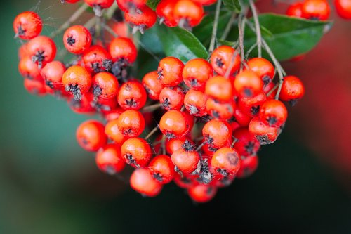 nature  fruit  berry