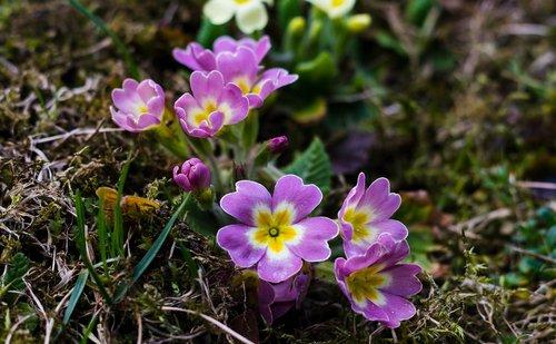 pobūdį, gėlė, floros, žydi, Sodas, stationofinspiration, Ru