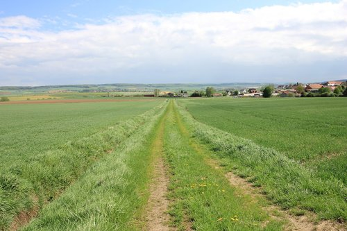 nature  grass  field