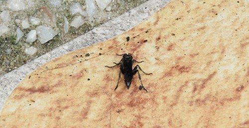 nature  animalia  insect