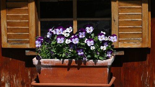 nature  flowers  window