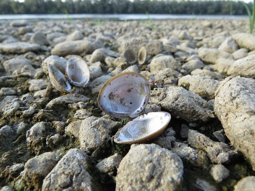 nature  shell  river
