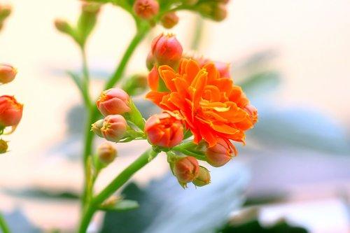 nature  flower  leaf