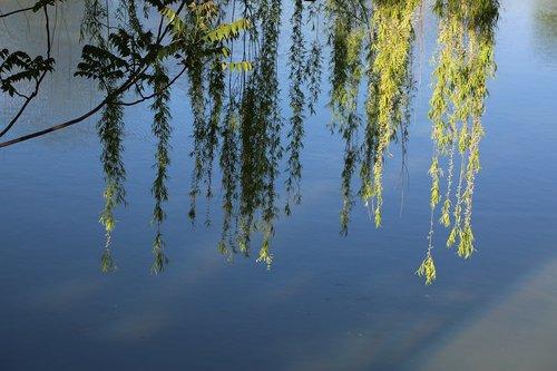 nature  tree  water