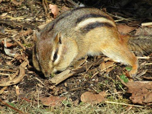 nature  wildlife  mammal