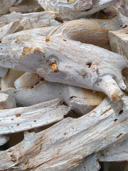 nature  wood  close up