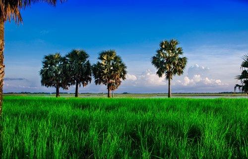 nature  landscape  blue