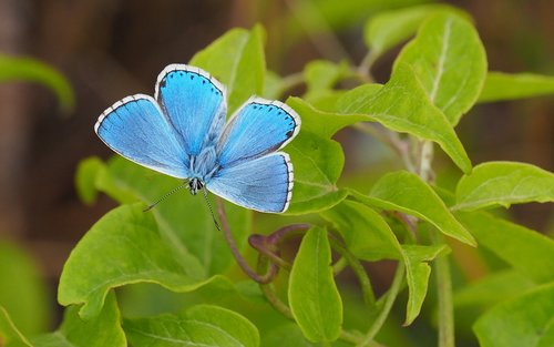 nature  butterfly  leaf
