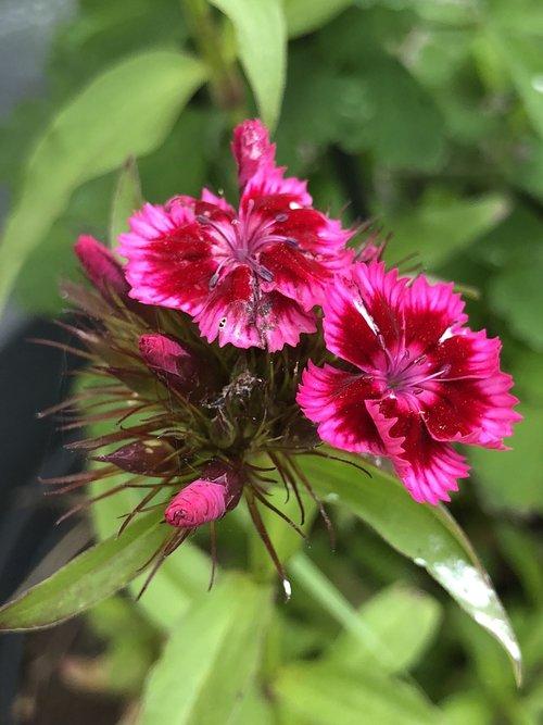 nature  botany  flower