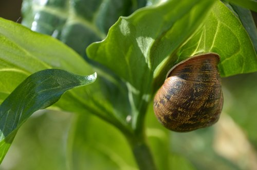 nature  green  snail