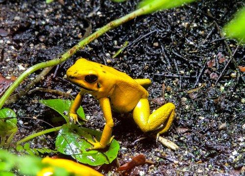 nature  animals  frog