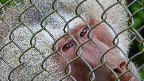 nature  monkey  wild nature