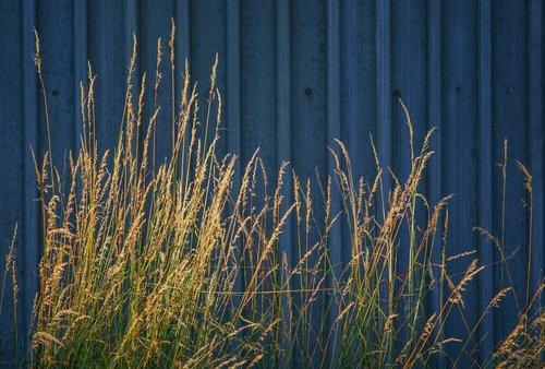nature  architecture  grass