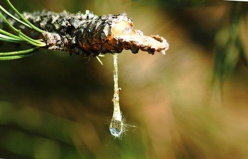 nature  pitch  drop