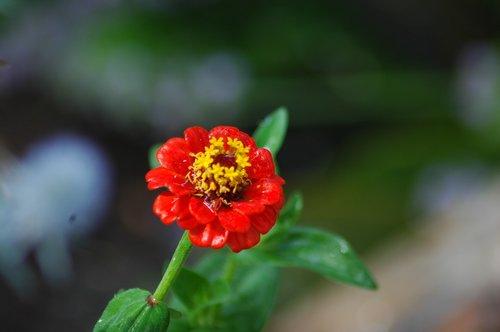 nature  flower  flora
