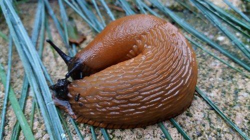 nature  snail  slug