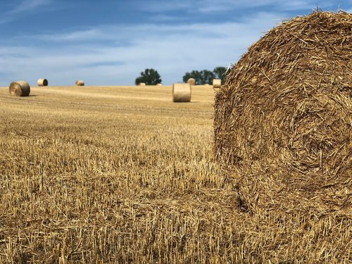nature  straw bales  harvest