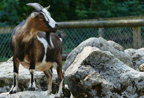nature  animal enclosures  light