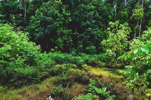 nature  green  pa