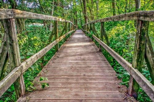nature  architecture  wooden bridge