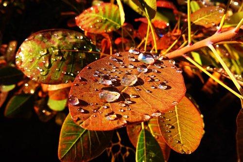 pobūdį, lapai, patenka spalvos, kristi lapai, spalva, rudens nuotaikos, ruduo, ruduo motyvas, ruduo lapas