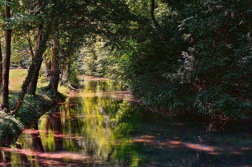 nature  park  trees