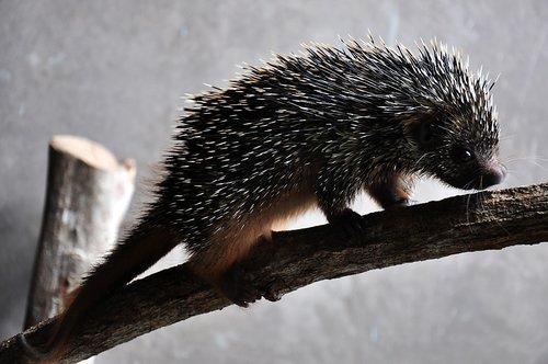 nature  fauna  animal