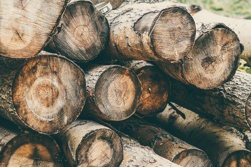 nature  logs  balance beam