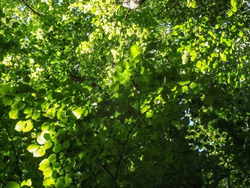 nature,tree,green,branch,aesthetic,leaf,leaves,color,shades of green,green green,canopy,foliage,plant