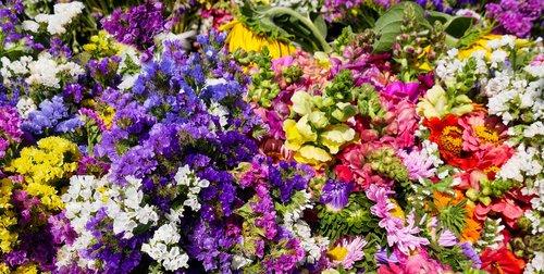 nature  flowers  blossom