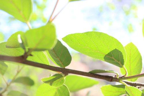 nature  earth  leaf