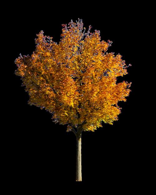 nature  tree  autumn