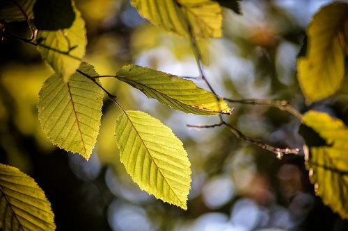 nature  plant  leaves