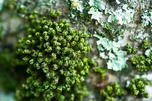 nature  algae  tree