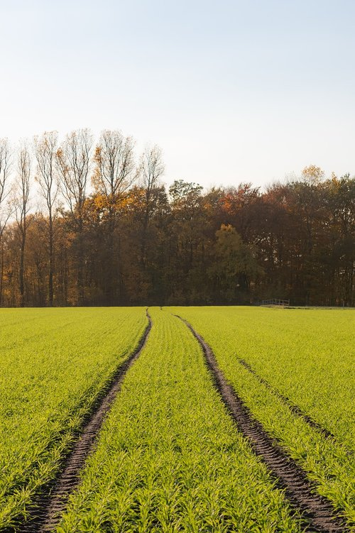 nature  traces  field
