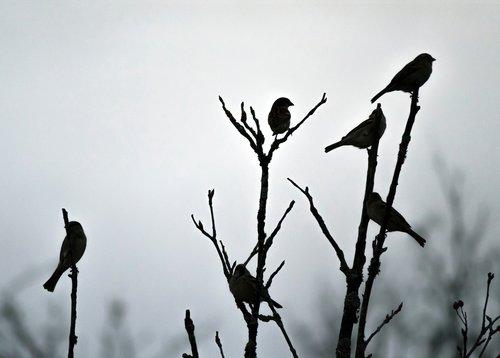 nature  birds  sparrows