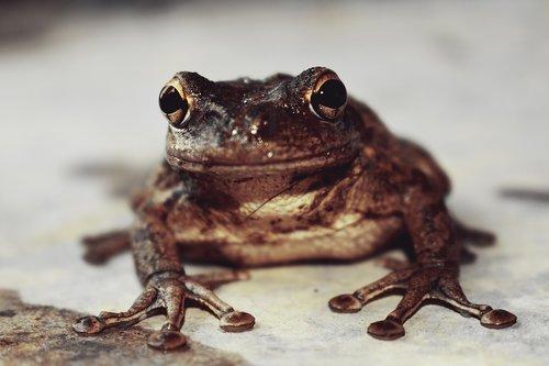 nature  frog cuban  soil