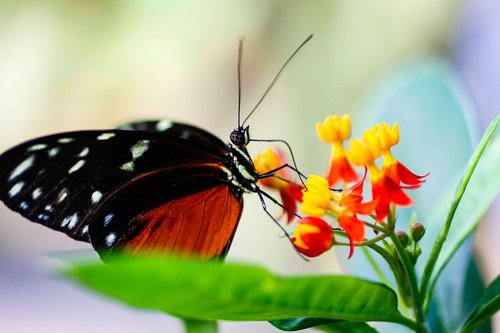 nature  insect  butterfly