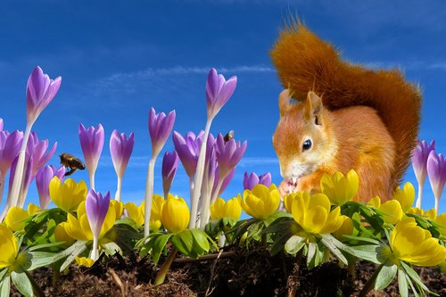 nature  spring  feelings