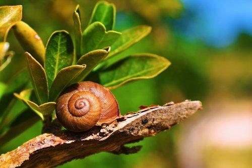 nature  snail  molluscum