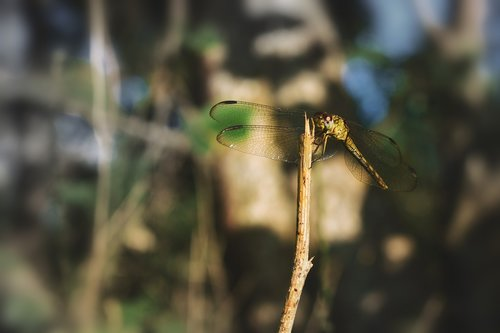 nature  dragonfly  animal